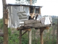 1-hase-auf-der-farm