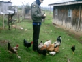 muthee-feeding-the-chickens